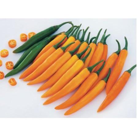 พริกสายพันธุ์เหลือง  หรือเรียกกันว่าพริกเหลืองนั้นเอง เป็นพริกที่มีลักษณะรูปร่างเรียวยาว ผลสีส้มเหลือง ก้านยาว