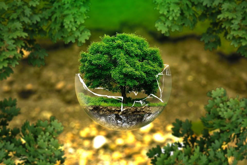 ต้นไม้ มีประโยชน์อีกมากที่คุณยังไม่รู้ไม่เพียงแต่สร้างร่มเงา แต่ยังมีประโยชน์อีกมาก