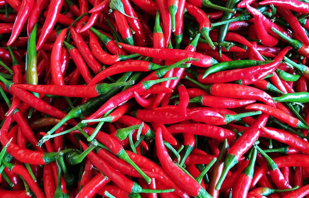 พริกเป็นพืชที่คนไทยส่วนใหญ่โปรดปรานเนื่องจากมีรถชาติที่ร้อนแรง เพิ่มความอร่อยให้กับเมนูอาหาร