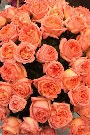 ชื่อดอกกุหลาบ ที่มีกลิ่นหอม ดอกกุหลาบที่เจ็ด ชื่อว่า กุหลาบเรน จอสซินนี (Rene Goscinny Rose) กุหลาบหอมที่คิดค้นโดยศูนย์พัฒนาน้ำหอมแห่งประเทศฝรั่งเศส เ