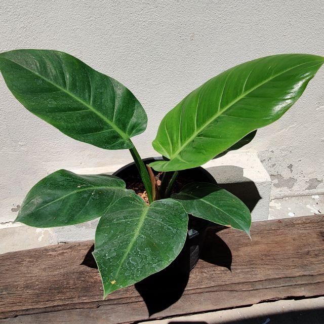ต้นไม้มงคลปลูกแล้วเฮง รับทรัพย์ และช่วยเสริมโชคลาภ