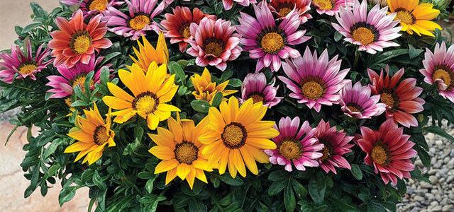 พันธุ์ไม้ดอก ที่ช่วยฟอกอากาศ