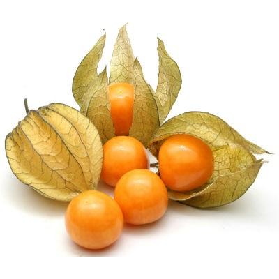 พืชตระกูลเบอร์รี่น่าปลูก พันธุ์ที่สี่ คือ เคพกูสเบอรี่  (Cape Gooseberry) เรียนกอีกอย่างว่า โทงเทงฝรั่ง หรือระฆังทอง  มีถิ่นกำเนิดมาจากประเทศบราซิล มีสีเหลือง
