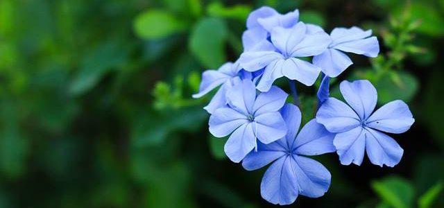 ดอกไม้จัดสวน ที่มีสีสวยสไตล์ไทย-อังกฤษ