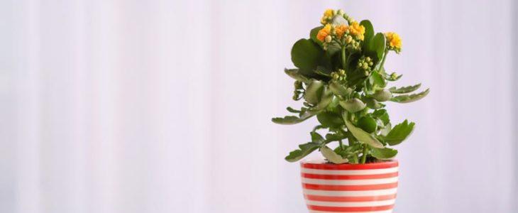 ประโยชน์พันธุ์ไม้ดอก ปลูกไว้ในบ้าน
