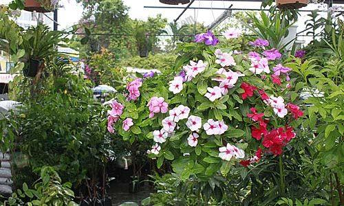 พันธุ์ไม้ที่มีดอก ที่ช่วยฟอกอากาศ