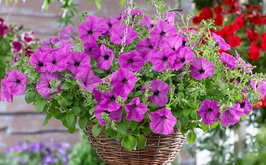 พันธุ์ไม้ดอกที่ปลูกไว้ใช้ตกแต่งเพื่อความสวยงาม