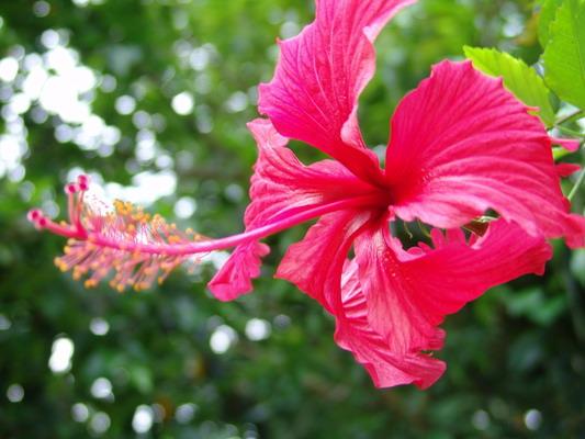 พันธุ์ไม้ดอก ที่ให้ดอกได้อย่างสวยงาม