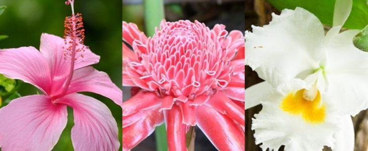 พันธุ์ไม้ดอก ไม้ประดับที่มีอยู่ในประเทศไทย