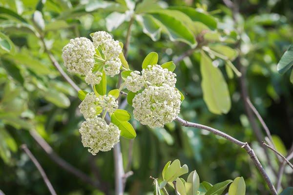 พันธุ์ไม้ดอก ไม้ประดับสามารถนำไปใช้ประโยชน์ได้