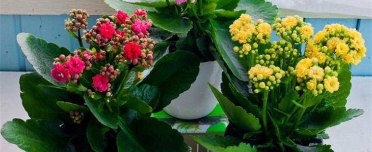 ไม้ดอกที่ปลูกง่าย เหมาะสำหรับผู้ที่เริ่มต้นปลูกต้นไม้