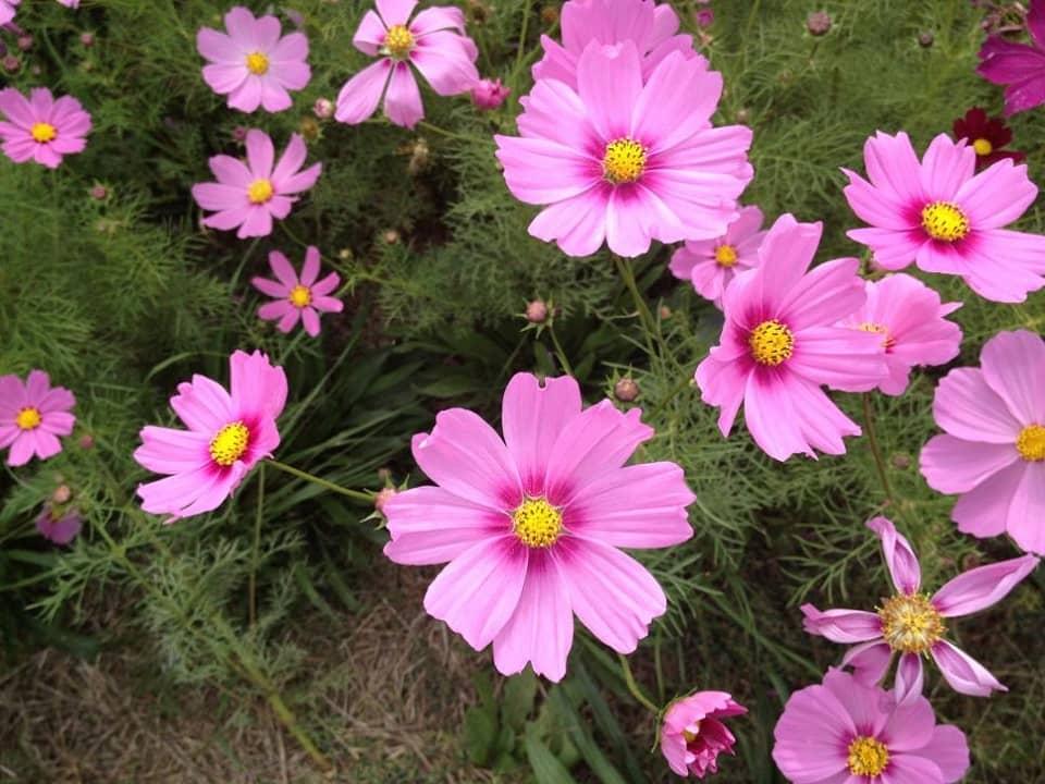 ไม้ดอกที่ปลูกง่าย