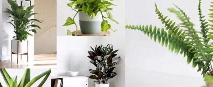 ต้นไม้ฟอกอากาศ ที่มีรูปทรงสวยแปลกตาปลูกในบ้านหรือในห้องนอนก็ได้