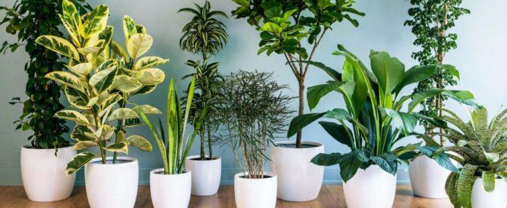 ต้นไม้ฟอกอากาศ สามารถปลูกไว้ฟอกอากาศภายในบ้านได้จริงหรือไม่