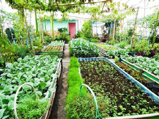 ปลูกผักสวนครัวรั้วกินได้ ที่นำมาประกอบอาหารได้หลายประเภท