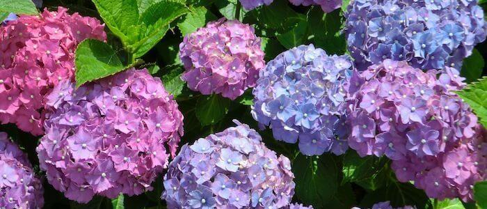 ไม้ดอกปลูกง่าย ดอกที่มีสีสันสวยงามที่ทนร้อนและชื่นชอบแดดจัดๆ
