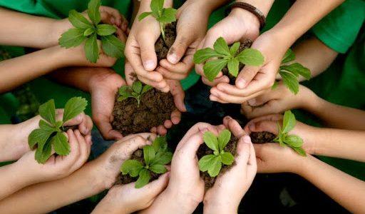 ประโยชน์ของการปลูกต้นไม้ ที่ให้ประโยชน์มากกว่าที่ทุกคนคิด