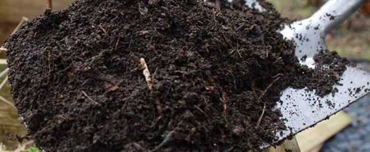 การเลือกดินปลูกในกระถาง แบบไหนที่ควรใช้ในการปลูกต้นไม้